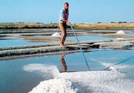 Harvesting_Sea_Salt