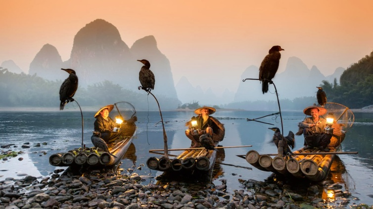 Comorant Fishing in China's Yongjia County, Zhejiang Province.
