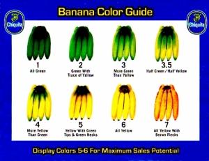 banana-guide